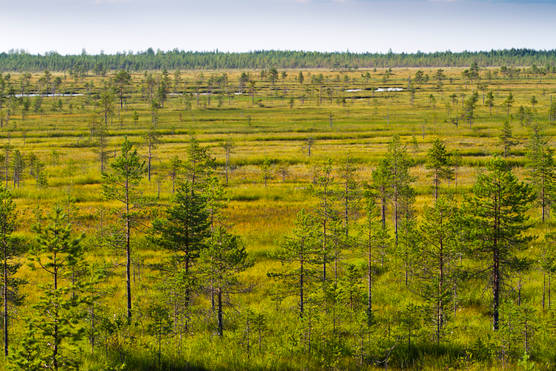 Protected marsh in Northern Finland.